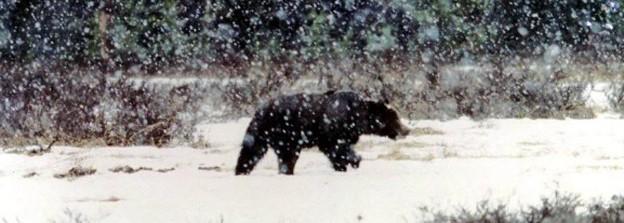 bjørn landbrukstidende
